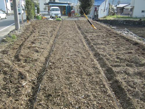 トウモロコシ定植.12.04.10.