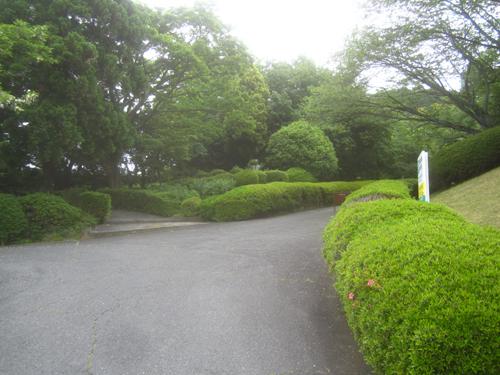 県立図書館から梅太郎博士の銅像.14.05.14.