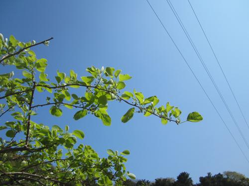 レインボーレッドと空.12.04.18.JPG