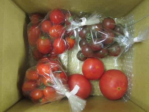 トマトセット.12.07.24.