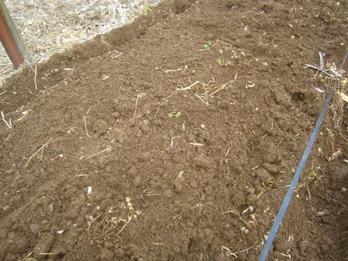 ミニトマト露地栽培畝立て.15.03.17.
