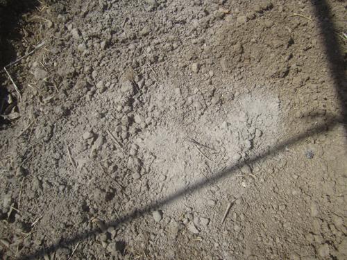 草木灰の散布.15.03.28.