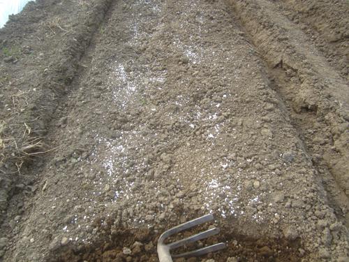 露地トマト園の耕作.15.05.30.