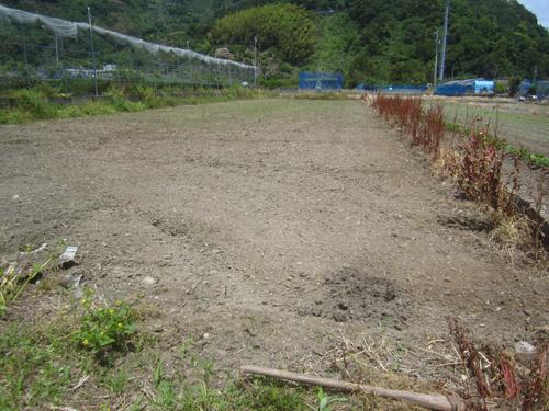 水田を野菜畑に.13.05.19.