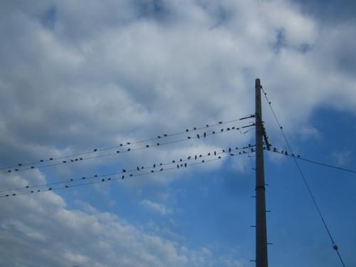 電信柱に鳥.13.06.29.
