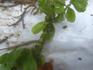 冬のアブラムシ2.19.02.21.jpg